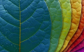 Picture BACKGROUND, LEAVES, COLOR, LEAF, GRADUATION
