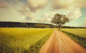 Picture road, tree, farmland