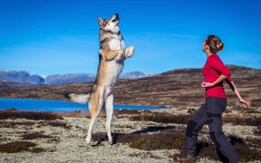 Picture jump, the game, dog, girl, Jumping