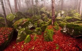 Picture autumn, forest, nature, fog, stones