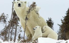 Picture winter, bear, bears