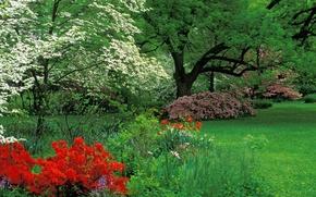 Picture Azaleas, Kentucky, Louisville, Audubon Park