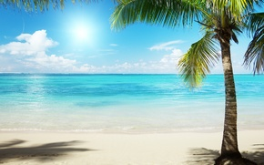 Wallpaper palm trees, landscapes, shore, sand, sea, beaches, water, Palma, the ocean, the sun