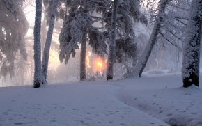 Picture winter, the sun, snow, trees, nature, fog, photo