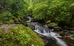 Wallpaper stones, Ireland, trees, the bushes, moss, greens, stream, Owengarriff River, Killarney national park, for, forest