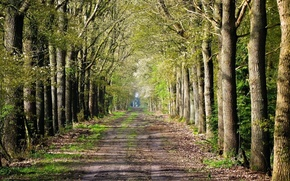 Picture road, forest, trees, road inside trees