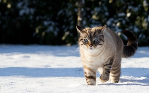Picture winter, cat, cat, snow, nature, shadows