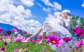 Picture clouds, flowers, mood, toy, doll, meadow, kosmeya