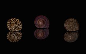 Picture macro, reflection, pattern, shell, shell