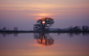 Wallpaper twilight, sunset, lake, tree, dusk, reflection, branches