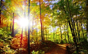 Picture the sun, nature, trees, trail, rays of light, photo, autumn, forest