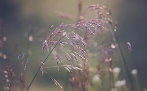 Picture grass, macro, bokeh