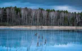 Picture cold, autumn, forest, trees, lake