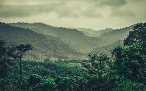 Picture greens, forest, mountains, nature, fog, Park, stay, Vietnam