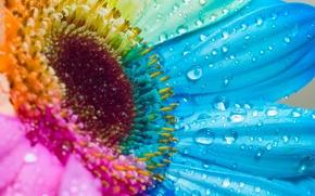 Wallpaper color, petals, 157, drops