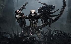 Picture Alien, games, predator