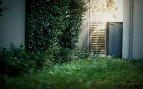Wallpaper bokeh, glare, light, grass, the door, the bushes, yard