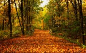 Picture road, autumn, forest, leaves, trees, bridge, nature, Park, colors, colorful, forest, road, trees, nature, bridge, ...