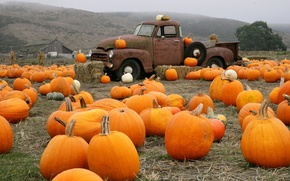 Picture Truck, Farm, Pumpkin