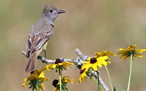 Picture flowers, background, bird, branch, yellow, rudbeckia