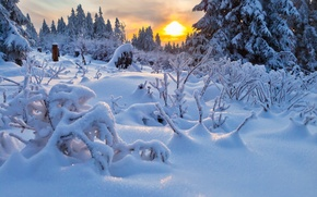 Picture winter, sunset, windbreak