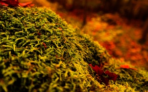 Picture Wood, Tree, Autumn, Forest, Moss, Stump