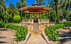Picture palm trees, The city, Gazebo, Summer, Park, Plants, Park, Summer, Town