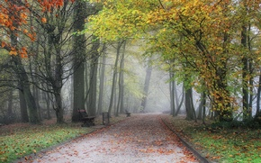 Picture autumn, bench, fog, Park, track, Belgium, alley, trees, park, Autumn, fog