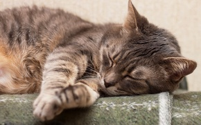 Picture cat, sleeping, Cats, Sleep