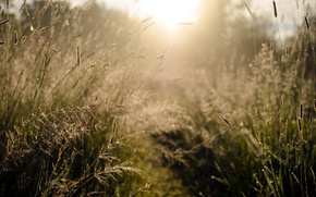 Picture grass, light, nature, morning