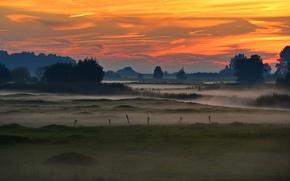 Picture trees, fog, Germany, glow, swamp, Schleswig-Holstein, Elbe valley, Wedel