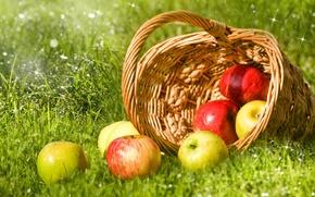 Wallpaper grass, drops, Rosa, glare, basket, apples, green, red, fruit, bokeh