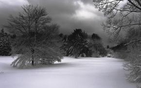 Wallpaper snow, trees, Winter