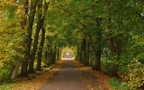 Picture trees, Autumn, track, trees, autumn, path