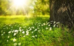 Picture summer, rays, light, flowers, tree, glade, trunk, Larisa Koshkina