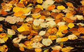 Picture autumn, leaves, sheet, stream, widescreen, Wallpaper, stream, wallpaper, widescreen, background, the Wallpapers, full screen, HD …
