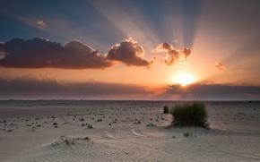 Picture the sky, the sun, clouds, sunset, orange, blue, desert, Bush, desert, sunset, clouds, sand, sunlight, ...