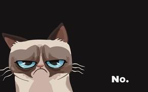 Picture cat, evil, cat, grumpy