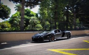 Picture road, trees, markup, black, shadow, the fence, lamborghini, black, side view, aventador, lp700-4, Lamborghini, aventador