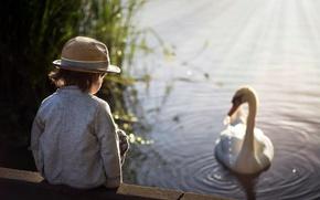 Wallpaper boy, Swan, lake