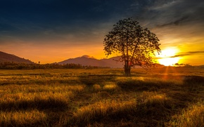 Picture grass, sunset, nature, tree, hills