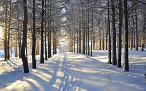 Picture winter, forest, snow, trees, traces, clearing