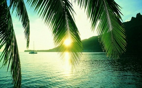 Picture rays, sun, Seychelles, palm, trough