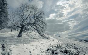 Picture winter, field, snow, landscape, tree