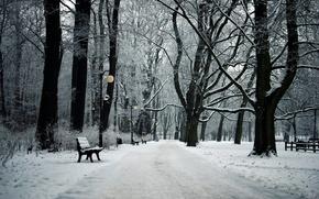 Picture winter, landscape, Park