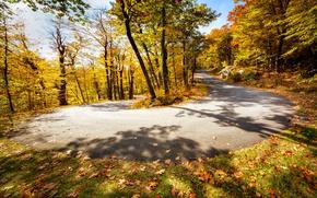 Picture road, autumn, turn