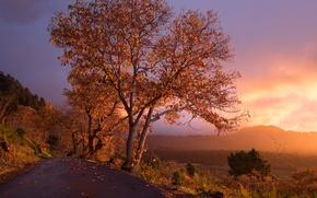 Wallpaper tree, road, sunset