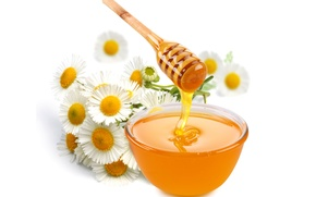 Picture flowers, chamomile, honey, spoon, white background, bowl