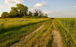 Wallpaper road, field, summer, landscape, nature