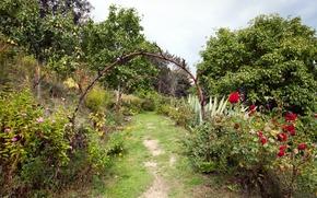 Picture Flowers, Nature, Garden, Trail, Plants, Roses, Nature, Flowers, Roses, Garden, Path